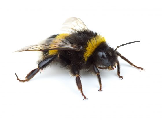 Bee Pest Control Manchester